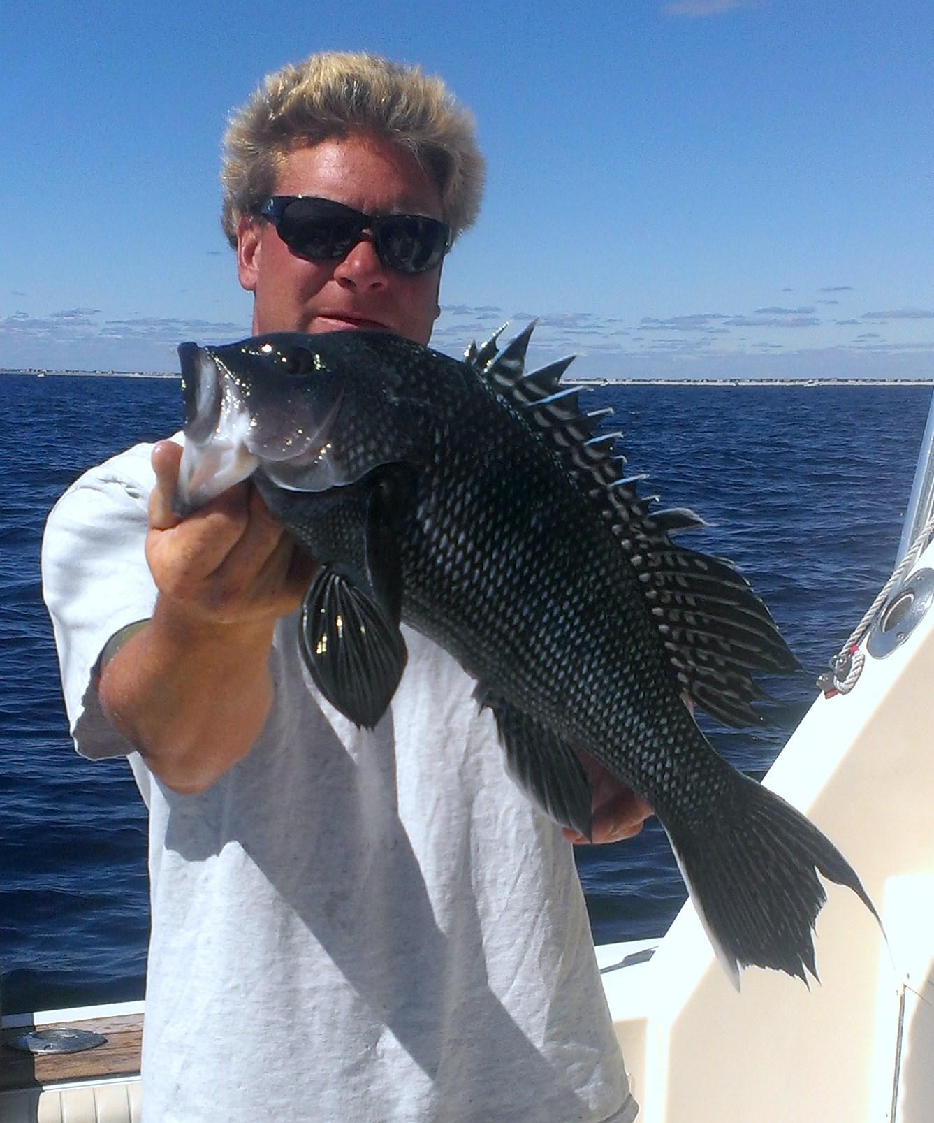 Sea bass fishing charter new jersey charter fishing nj for Bass fishing season