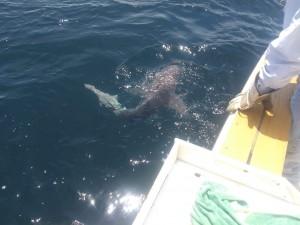 Shark Fishing Point pleasant nj