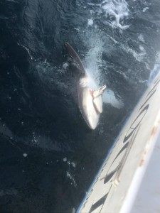 Shark fishing NJ