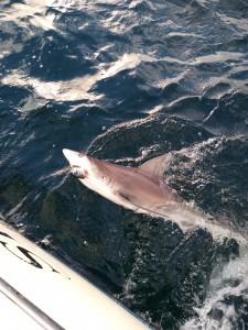 Deep Sea Shark Fishing on Blue Chip